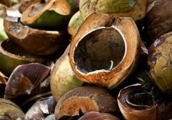 kokosovy zdravi