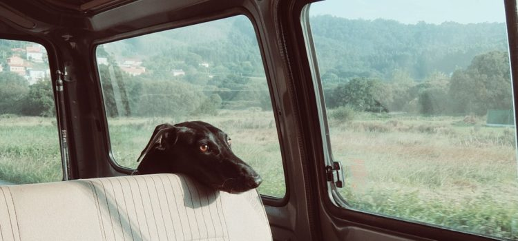 Auto pro psa