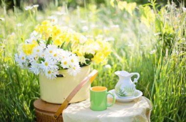 zeleným čajem a kávou