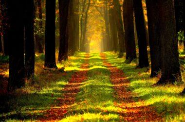 běhejte v lese