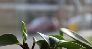 Pokojové rostliny bez starosti