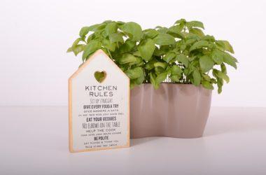 Pěstování bylinek v bytě